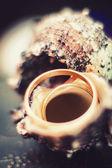Snubní prsteny na shell — Stock fotografie