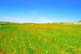 Weiland met gras, papavers en madeliefjes — Stockfoto