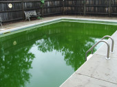 Inground pool green algae water — Stock Photo