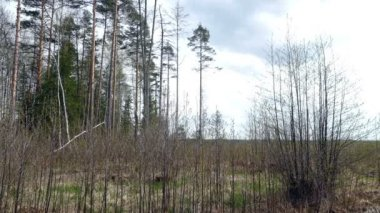 Spring day undergrowth in Russia — Stock Video