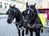 Krásné koně — Stock fotografie