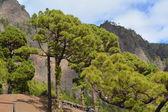 Caldera de taburiente la palma, canary Islands, İspanya. — Stok fotoğraf