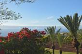 Coast in Tenerife South with tropical garden at the Canary Island ,Spain — Stock Photo