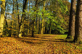 Autumn colors 2 — Stock Photo