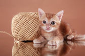 Kitten and skein of thread — Stock Photo