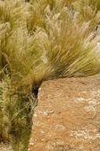Southwestern stone and weed — Stock Photo