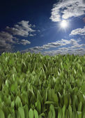 Grass with sky in the background — Stock Photo
