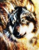 Wolf , multicolor collage  fractal effect — Stock Photo