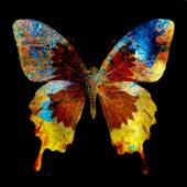 Illustration of a  color butterfly, mixed medium, black background — Stock Photo