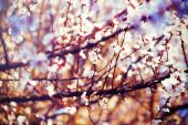 Spring flowers, Spring blossom background — Stock Photo