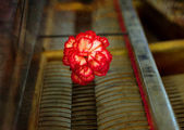 Old vintage gand piano keys with a red carnation flower, vintage picture. — Stock Photo