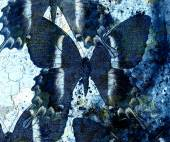 Abstract background with blue butterfly collage. — Stock Photo