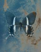 Illustration of a color butterfly, mixed medium, structure  background. — Stock Photo