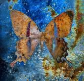 Kolor motyl, ilustracja i mieszanej średnie, streszczenie tło, vintage efekt rdzy — Zdjęcie stockowe