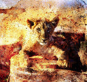 Lion cub photos and painting Abstract Collage. Eye contact. Abstract structure background. — Stock Photo
