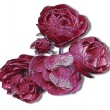 Relief embossed red and pink roses reminiscent of woodcut — Stock Photo #70985277