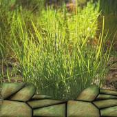 Natural background with relief embossed grass and stones — Stock Photo