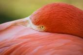 Pink flamingo on the green background — Stock Photo