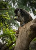 Cute Lemur sits on tree branch — Stock Photo