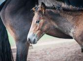 Horses in the Buryat village — Stockfoto