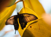 Butterfly on yellow leaves — Stock Photo