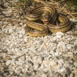 Angry snake on the ground — Stock Photo #63064301