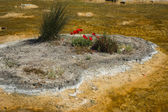Springs in Thermopiles, Greece — Stock Photo