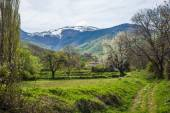 Meadow and fruit trees on mountains — Stock Photo
