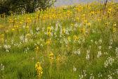 Flower lawn on a hillside — Stock Photo