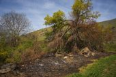 Fields and trees after the fire — Stock Photo