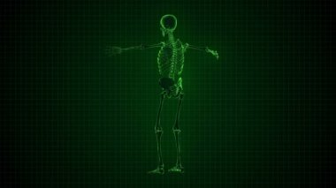3D Animation of Human Skeleton x-ray green interface Loopable. Alpha matte — Stock Video