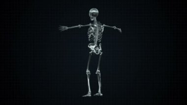 3D Animation of Human Skeleton Silver Loopable. Alpha matte — Stock Video