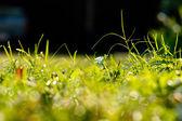 Green grass under the morning sunlight. — Stock Photo