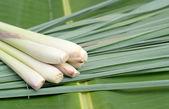 Lemon grass. — Stock Photo