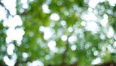 Fondo borroso verde natural. Defocused backg abstracto verde — Foto de Stock