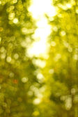 Natural green blurred background. Defocused green abstract backg — Stock Photo