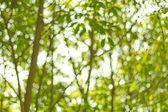 Doğal yeşil arka plan bulanık. Ufuk yeşil soyut backg — Stok fotoğraf