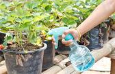 Spraying the plant. — Stock Photo