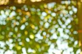 Natural green blurred background. Defocused green blurred backgr — Stock Photo