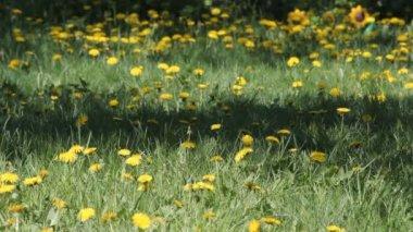 Spring in garden — Stock Video