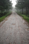 Road in mistery forest — Stock Photo