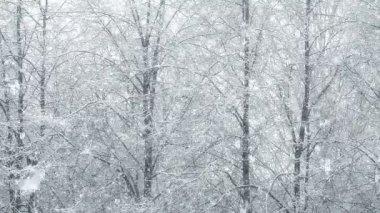 Mega extra big global snowfall loop tree winter forest — Stock Video