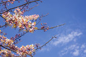 Pink flower on blue sky — Stock Photo