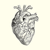 Human heart Sketch — Stock Vector