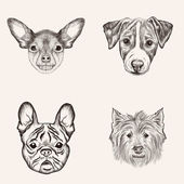 Sketch Bulldog Terriers. Hand drawn realistic faces of dogs vect — Stock Vector