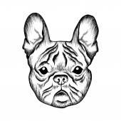 Sketch French bulldog. Hand drawn illustration. — Stockvektor