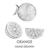 Sketch of the whole orange, half and segment. — Stock Vector