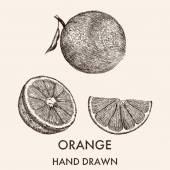 Sketch of whole orange, half and segment. — Stock Vector