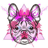 Sketch Hipster French bulldog face in triangle frame with waterc — Stock Vector