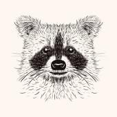 Sketch liner raccoon. Hand drawn vector  illustration in doodle  — ストックベクタ